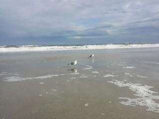 Seagulls on the coast of the ocean