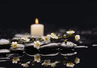Still life with Spring blossom with white candle on black stones