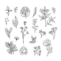 Plants and herbs icons set