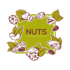 Nuts banner background template design, almond, cashew,  pistach