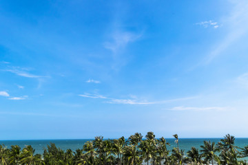 Panoramic view of Exotic Palm trees and blue ocean