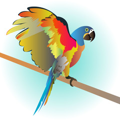 parrot bird vector tropical macaw red colorful