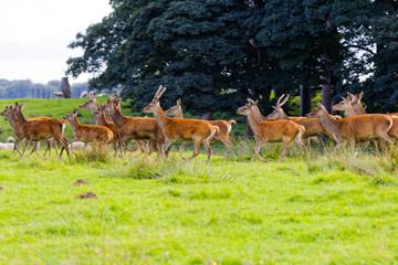 deer in woodland