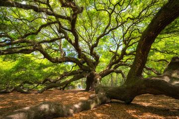 Underneath the Angel Oak Tree