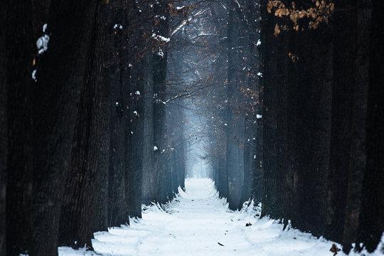 mystical oak alley winter