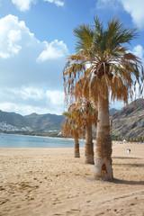 Palm trees on tropical paradise - beach Teresitas, Tenerife, Canary