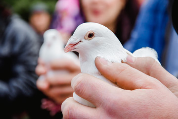 Dove in a man's hands.