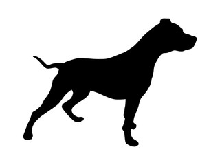 Pet pitbull / pit bull terrier dog or canine flat icon for animal apps and websites