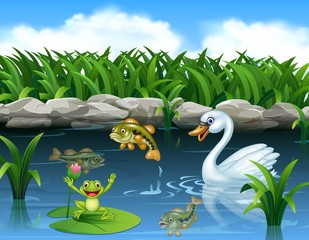 Cute swan swimming on the pond and frog