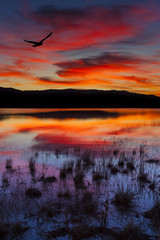 Swan Lake, Nevada. Sunset shot with bird in colorful sky.