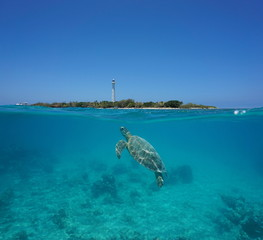 A green sea turtle underwater with Amedee island and lighthouse over the water split by waterline, New Caledonia, Noumea, south Pacific ocean