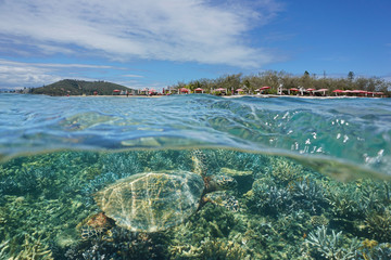 A hawksbill sea turtle underwater and islet Canard over the water split by waterline, New Caledonia, Noumea, south Pacific ocean