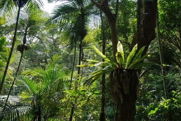 Subtropical vegetation in a forest of New Caledonia, Grande Terre island, south Pacific