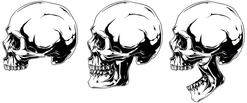 White human skull in profile projection set