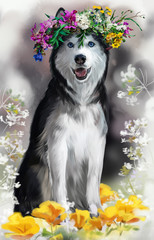 Husky watercolor painting
