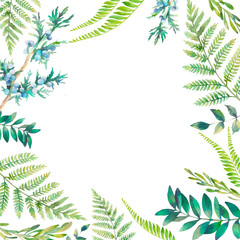 Watercolor floral frame. Hand drawn spring plants card design: botanical elements isolated on white background. Branches, fern, berries and leaves border