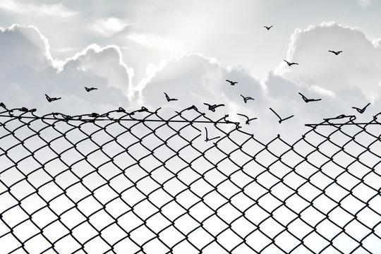 Grillage et liberté