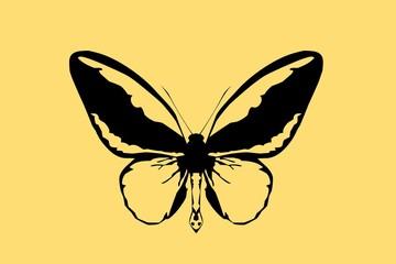 kresba motýla na žlutém pozadí