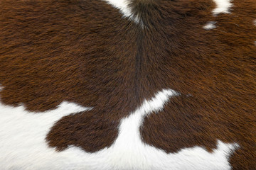 Cowhide, cow skin background close up.