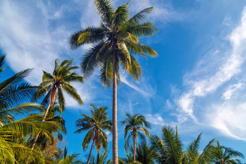 View of nice tropical background with coconut palms. Thailand. H