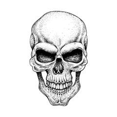 Graphic skull. Dotwork