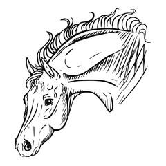Horse head isolated vector illustration