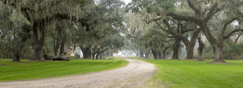 Southern plantation in the fog