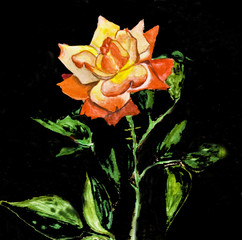 Rose on black, painting