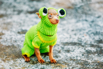 Chihuahua Dog Dressed Up In Frog Outfit, Staying Outdoor In Cold