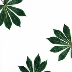 Green palm leaves frame on white background. Flat lay, top view