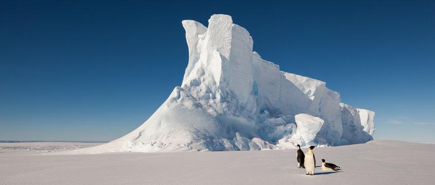 Emperor penguins in front of massive iceberg