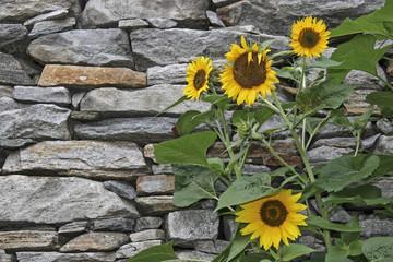 Unverputze Mauern aus Natursteinen bestimmen das Ortsbild vieler istrischer Dörfer