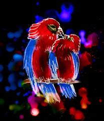 two cute parrots