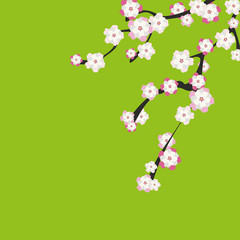 Cherry blossom. Sakura pink flowers background.