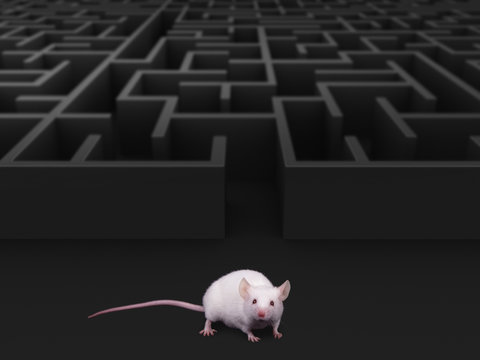White mouse at maze exit.