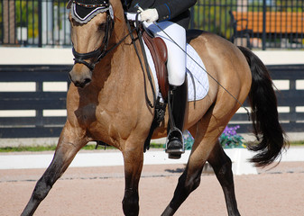 Detail of a buckskin colored horse and rider completing dressage moves in an arena.