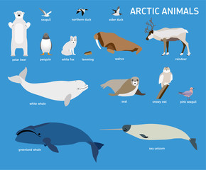 Animals of the Arctic. Vector Set of polar mammals and birds. Flat style illustration. Penguin, seal, lemming, owl, bear, fox, reindeer, walrus, duck, pink Seagull gull white and greenland whale