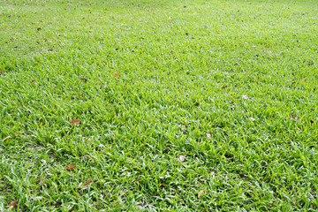 Green grass texture and background image photo