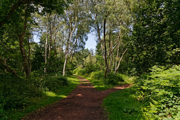 A footpath between the trees in Sherwood Forest divides left and right