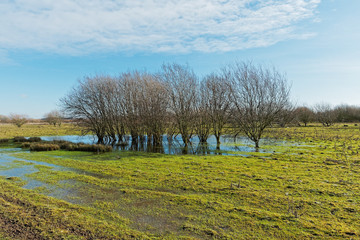 Group of trees in a waterlogged field