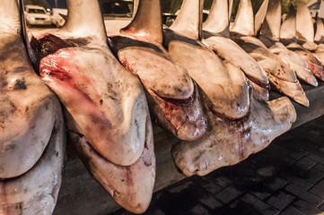 A variety of shark species hauled ashore at the Dubai Fish Marke