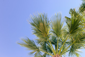 Beautiful palm tree in the blue sunny sky background