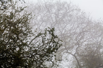 Tree, branch, leaf, foggy and misty view with blur background