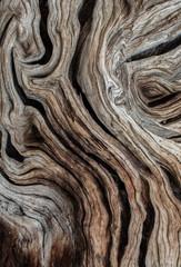 Photo sur Toile Oliviers Textura de olivo