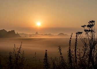 Nebel Impressionen in Wiste / Osterholz-Scharmbeck