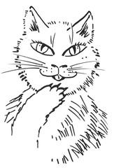 cat - hand drawn illustration