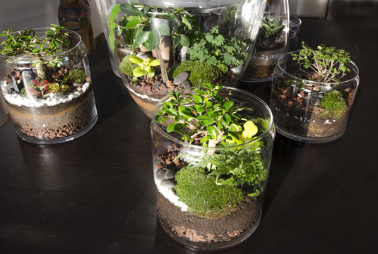 beau terrarium jardin d'intérieur
