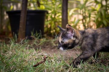 Side portrait of three color kitten.