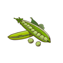 Green pea in vintage style