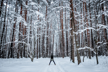 Beautiful winter day, pine tree forest,man standing backwards an